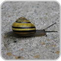 Snail Trail GPS Sports Tracker icon