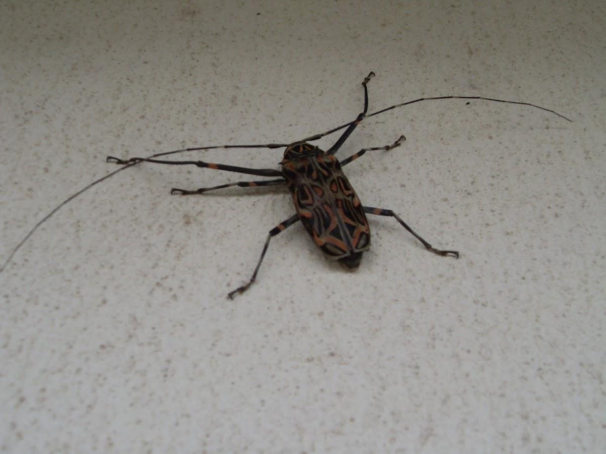 'Bug'