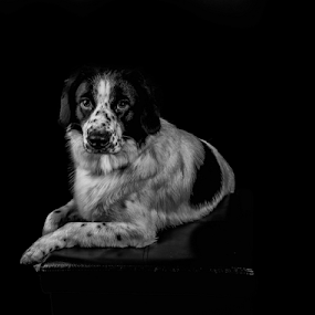 Rex by Parker Lord - Animals - Dogs Portraits ( somerset, dogs, lord parker photography, taunton, portrait )