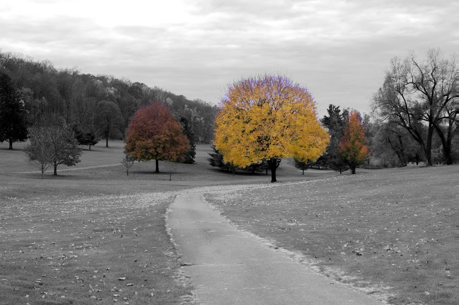 Autumn splendor by Layna Bowers - Landscapes Prairies, Meadows & Fields ( fall season, black and white, autumn, foliage, yellow, leaf, leaves )