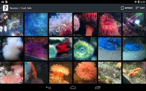 PicsPro for Picasa, Google+ - screenshot thumbnail