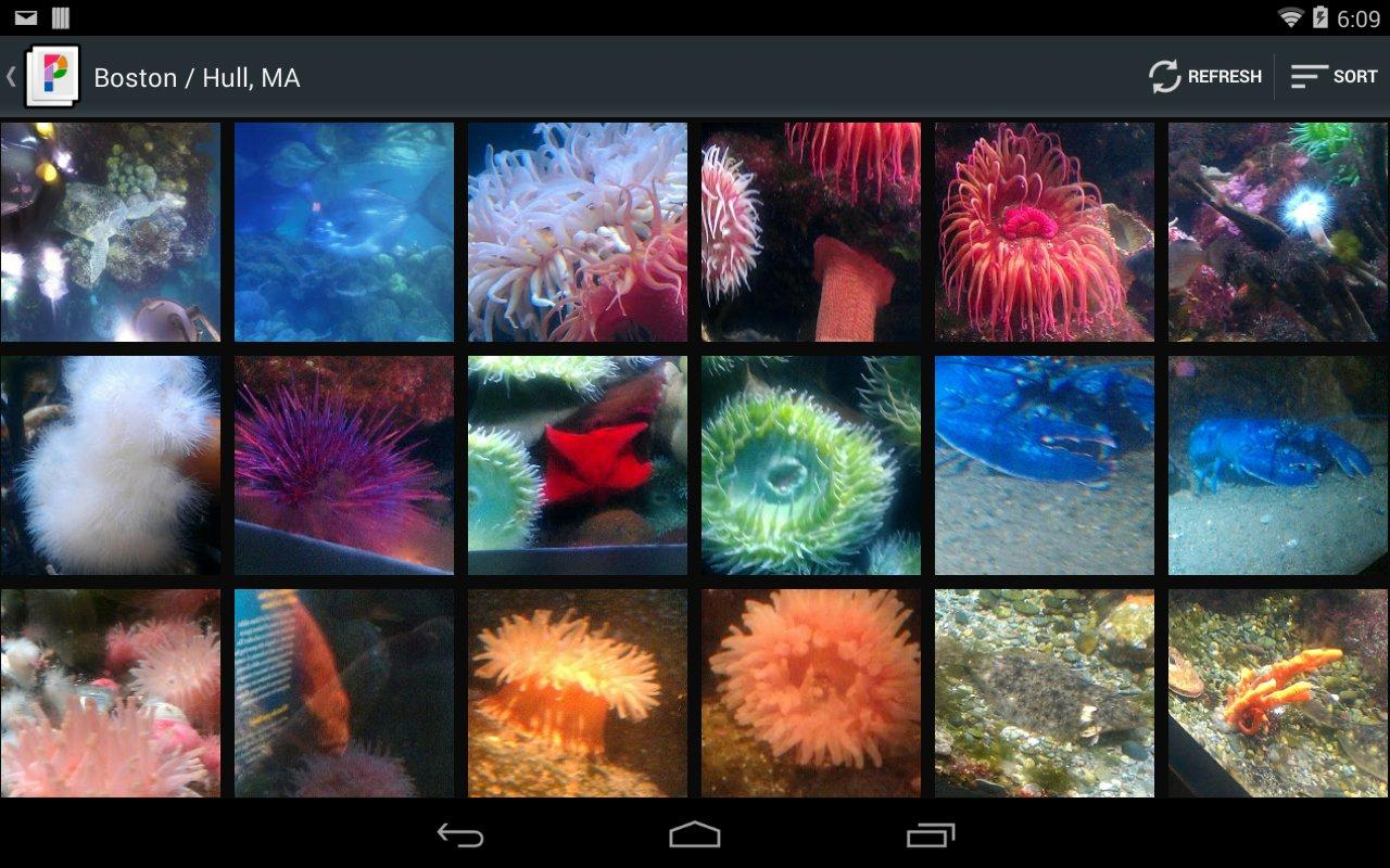 PicsPro for Picasa, Google+- screenshot
