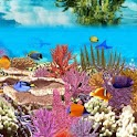 Amazing Undersea Aquarium Photo