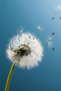 Galaxy S3 Dandelion - screenshot thumbnail