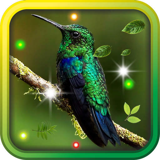 Colibri Songs live wallpaper LOGO-APP點子
