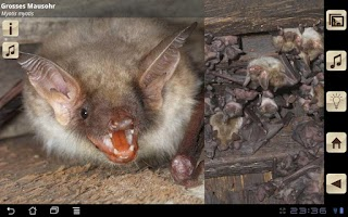 Screenshot of Swiss Bats
