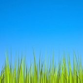 Grass Live Wallpaper [Donate]