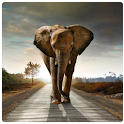Magic Effect Elephant logo