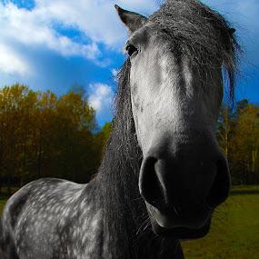 Wierdo by Kajsa Karlsson - Animals Horses ( spots, sky, grass, colorful, green, horse, funny, grey, fun, gray,  )