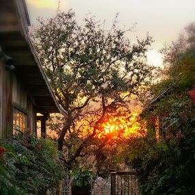 Gruene Dreams by Scott Walker - Nature Up Close Trees & Bushes ( peaceful, tree, color, bushes, sunsets, peace, texas, trees, gruene )