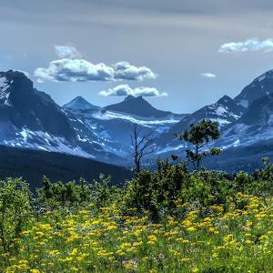 Glacier field of flowers no cr.jpg