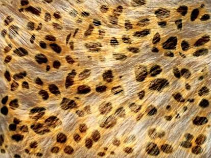豹紋牆紙29筆1|2頁-APP點子