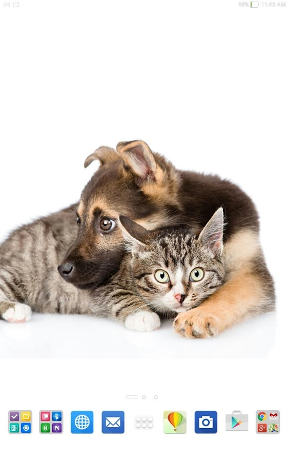 Cats And Dogs Collection 1