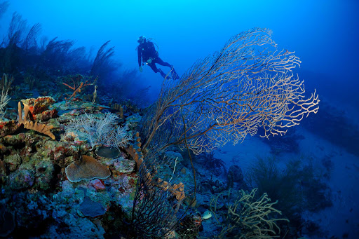 Beautiful reefs and shells lie below the warm waters of St. Eustatius, which offers some of the best dives in the Caribbean.