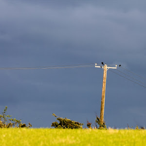 IMG_9922 on the wire.jpg