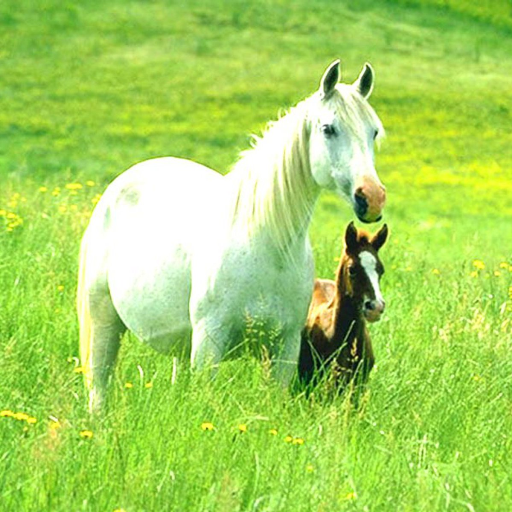 Horses Live Wallpaper LOGO-APP點子