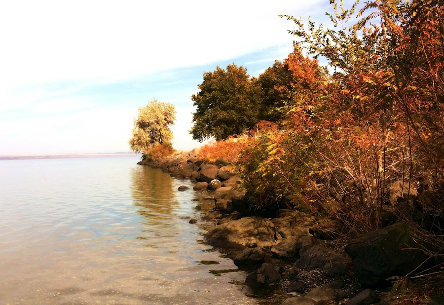 The River's Edge by Helen Jamison - Nature Up Close Trees & Bushes ( boardman, oregon, autumn, camping, columbia, columbia river, fall, boardman oregon, river )