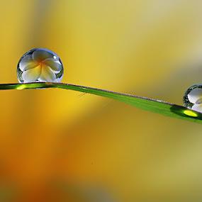 Dews by Dedy Haryanto - Nature Up Close Natural Waterdrops