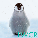 cute penguin live wallpaper icon