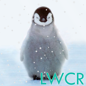 cute penguin live wallpaper