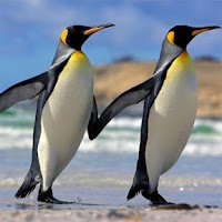 Screenshot of Penguins Jigsaw Puzzles