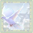 Catholic Prayers PRO icon