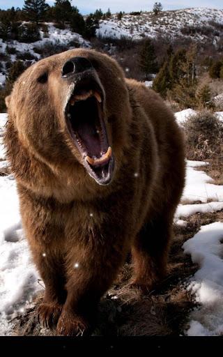 棕熊動態桌布