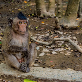 Lonely stare by Wahan Shahbazian - Animals Other Mammals ( staring, vietnam, cute, lonely, monkey,  )