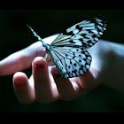 Где живут бабочки icon