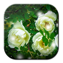 Free Roses Live Wallpaper icon