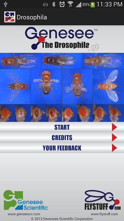 Drosophila- screenshot