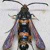 Florida Oakgall Moth