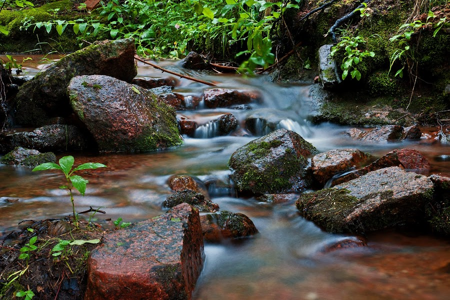 by Todd Yoder - Nature Up Close Water ( water, nature, green, foliage, creek, moss, smooth soft, rocks, slow speed )
