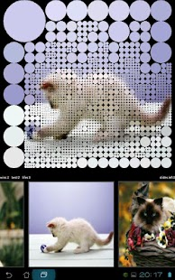 Guess Cats Pictures