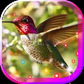 Humming Bird HD live wallpaper