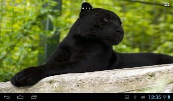 Screenshot of Black Panther