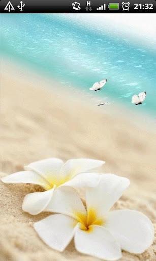 Beach Butterflies LWP