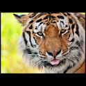 Animals : Tiger logo