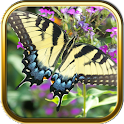 Butterfly Puzzle Games icon