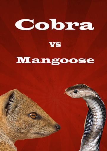 玩免費娛樂APP|下載Cobra vs Mangoose Fight Videos app不用錢|硬是要APP