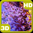 Kyoto Evening Blooming Sakura icon