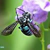 Neon Cuckoo Bee