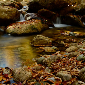 Fall  by Gabrielle Libby - Nature Up Close Water ( water, reflection, autumn, fall, nikon, leaves, rocks )