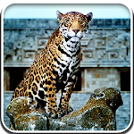 Leopard Live Wallpapers