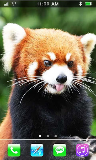 Red Panda live wallpaper