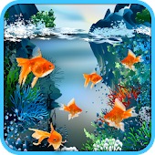 Real Fish Live Wallpaper