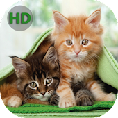 Wallpapers Cats - Nice Cats