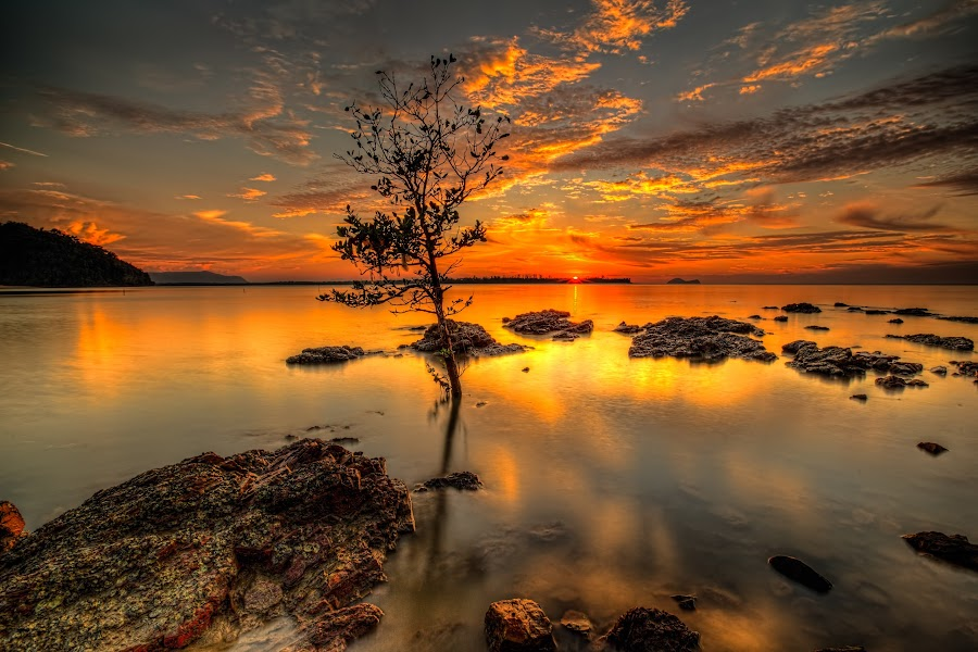 by NC Wong - Landscapes Waterscapes