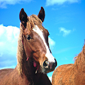 Best Horses Wallpapers