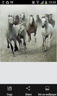 At Resimleri ( Horse Pictures) - screenshot thumbnail